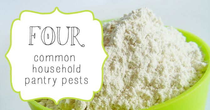 4 Common Pantry Pests To Watch Out For Pests Pantry Food