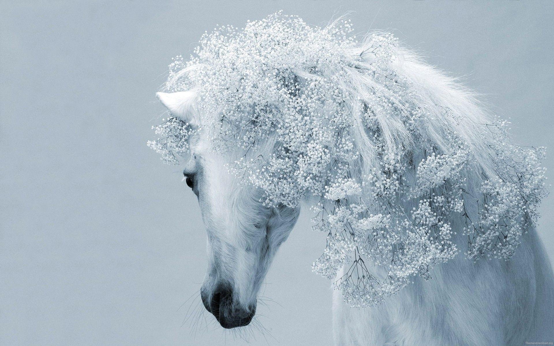 Most Inspiring Wallpaper Horse Fantasy - 98556954ff3e157ad773b5fb14cb2804  Collection_715079.jpg