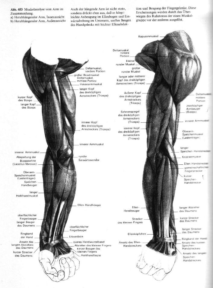 Gottfried Bammes - Der Nackte Mensch | Anatomy | Pinterest | Anatomy ...