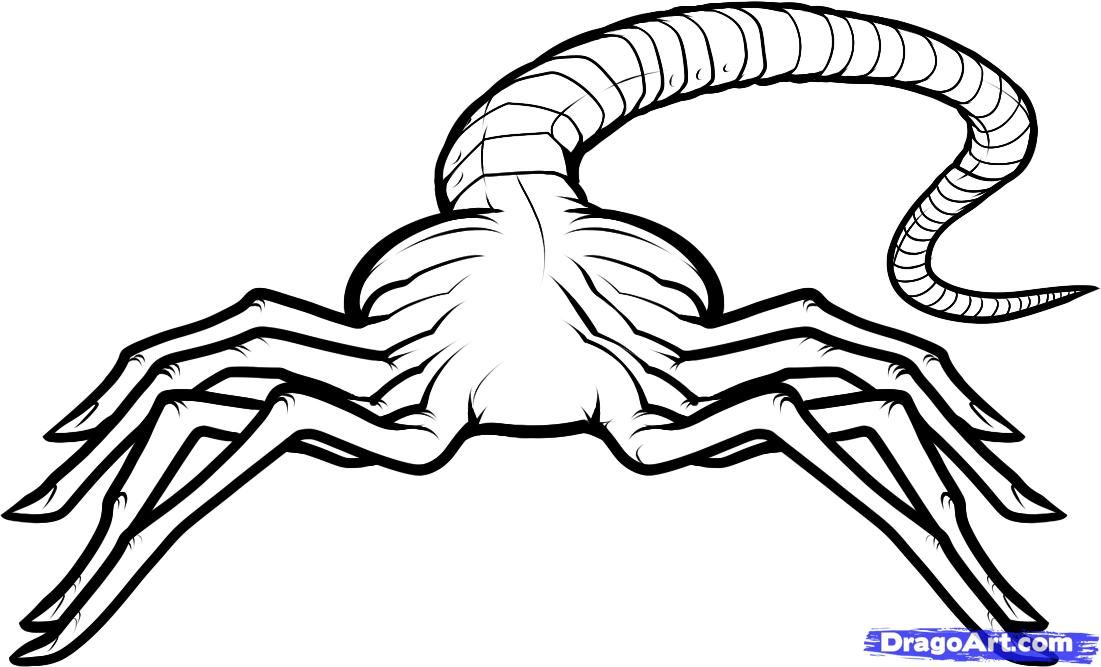 how to draw a facehugger, facehugger alien step 7