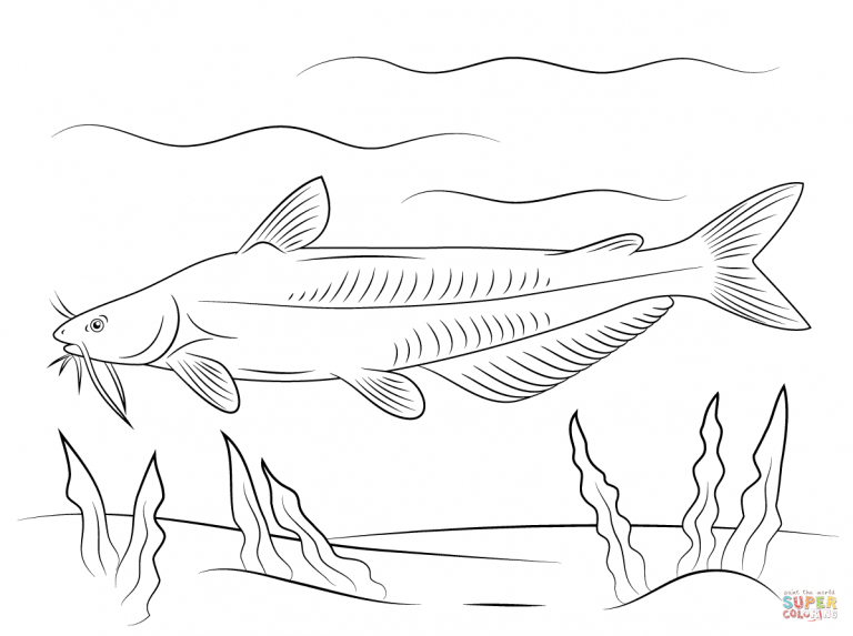 Free Printable Coloring Pages Within Blue Catfish Coloring Pages Fish Coloring Page Free Printable Coloring Pages Coloring Pages