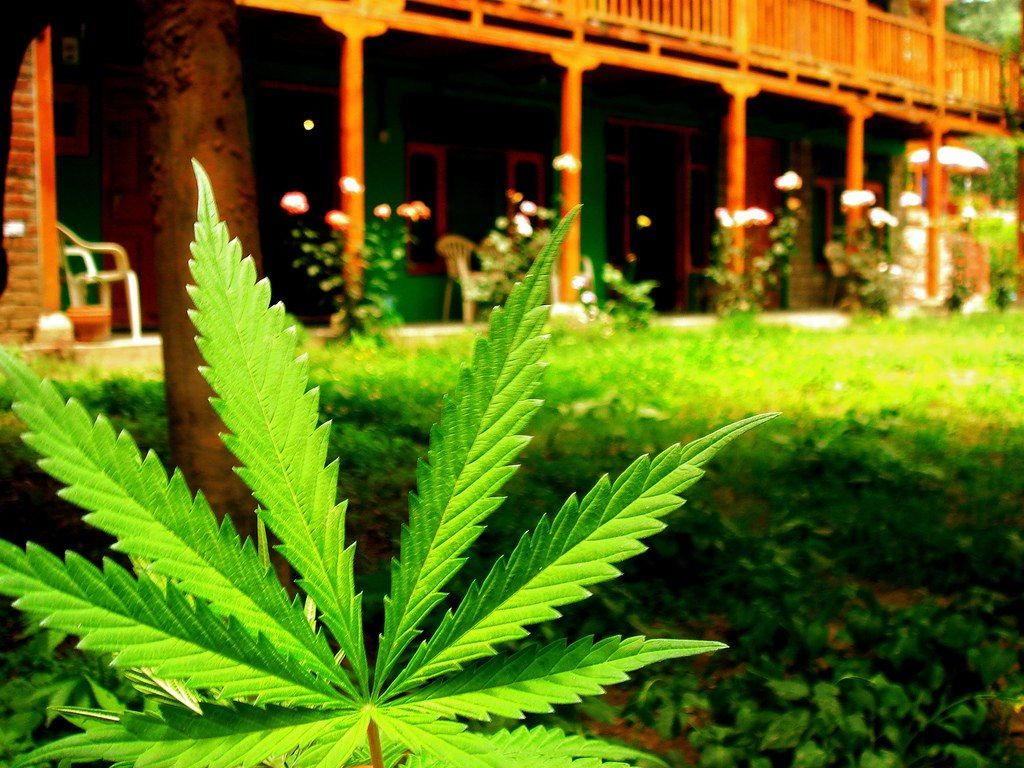 Marijuana effective in treating depression related to chronic stress.