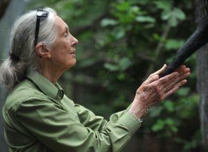Jane Goodall Jung
