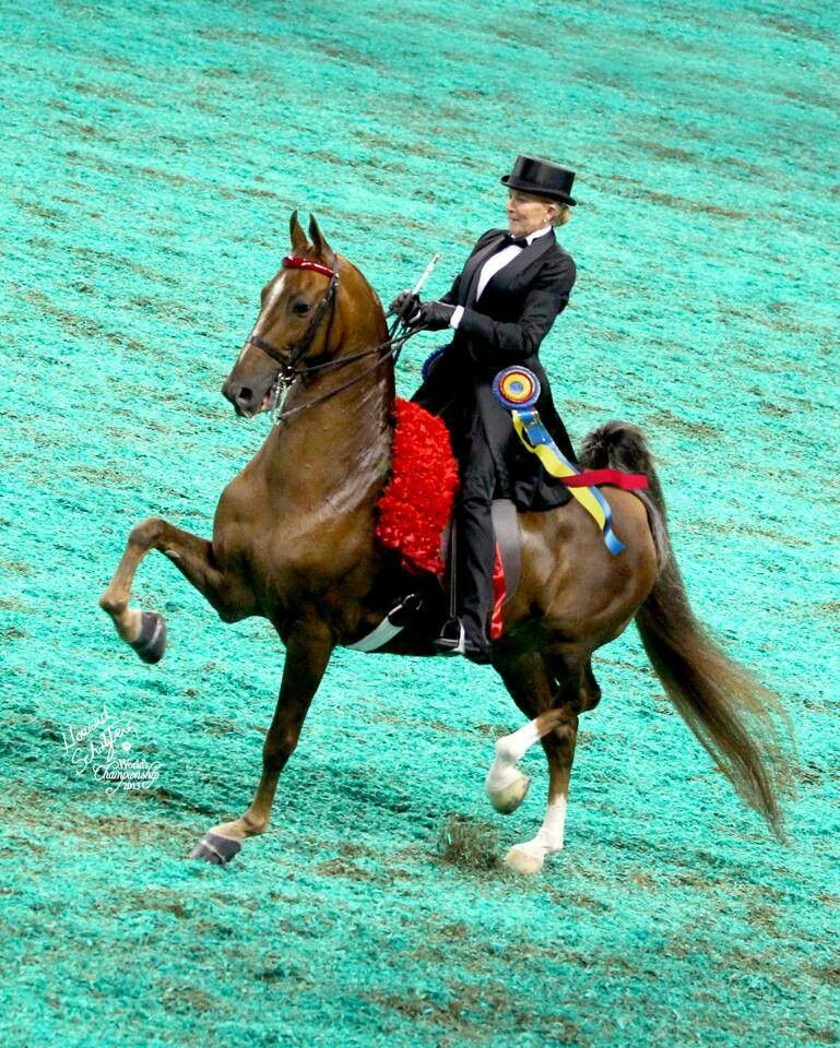 Ch Mr Center Stage And Mary Gaylord Mcclean Equestrian