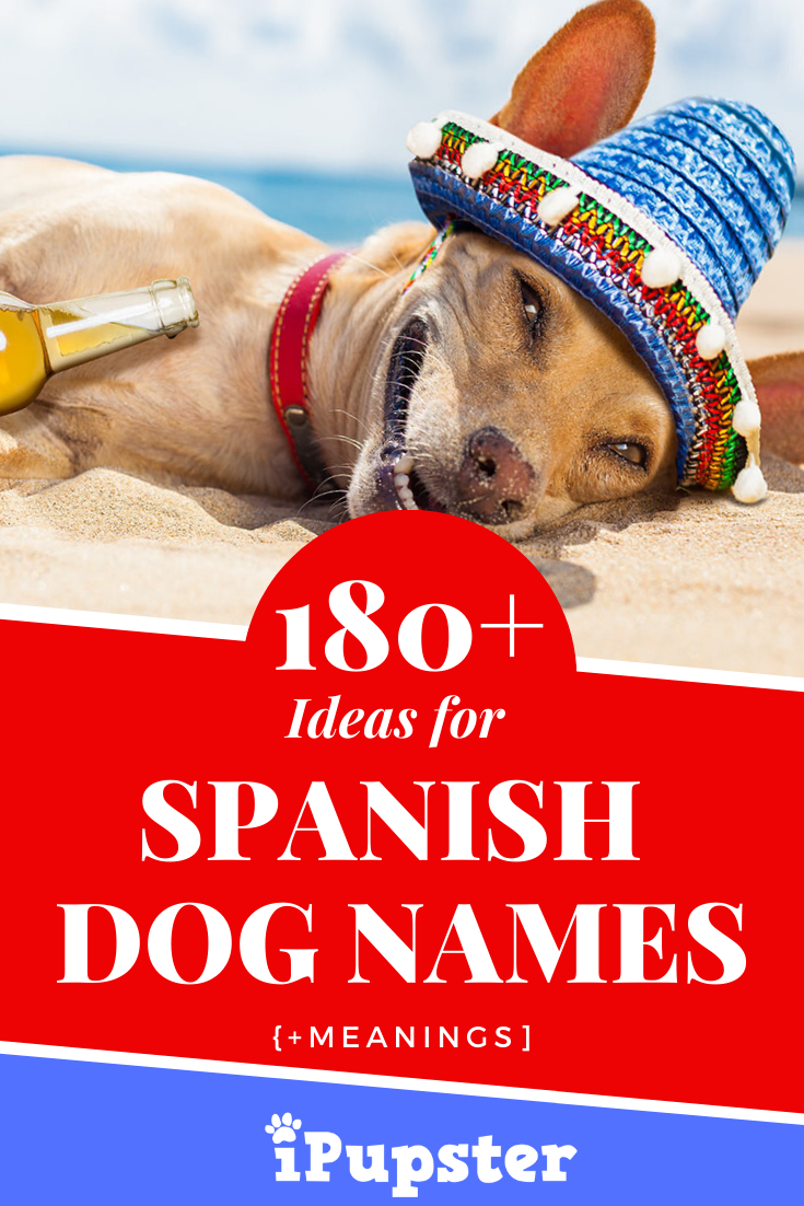 180 Spanish Dog Names Meanings In 2020 Dog Names Dog Names Male Female Dog Names