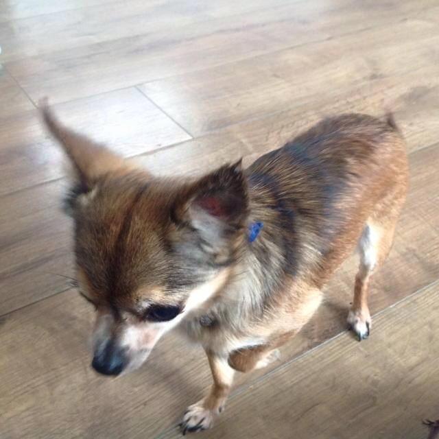 Female Dog Found In Chatham Dogs Chatham Kennel