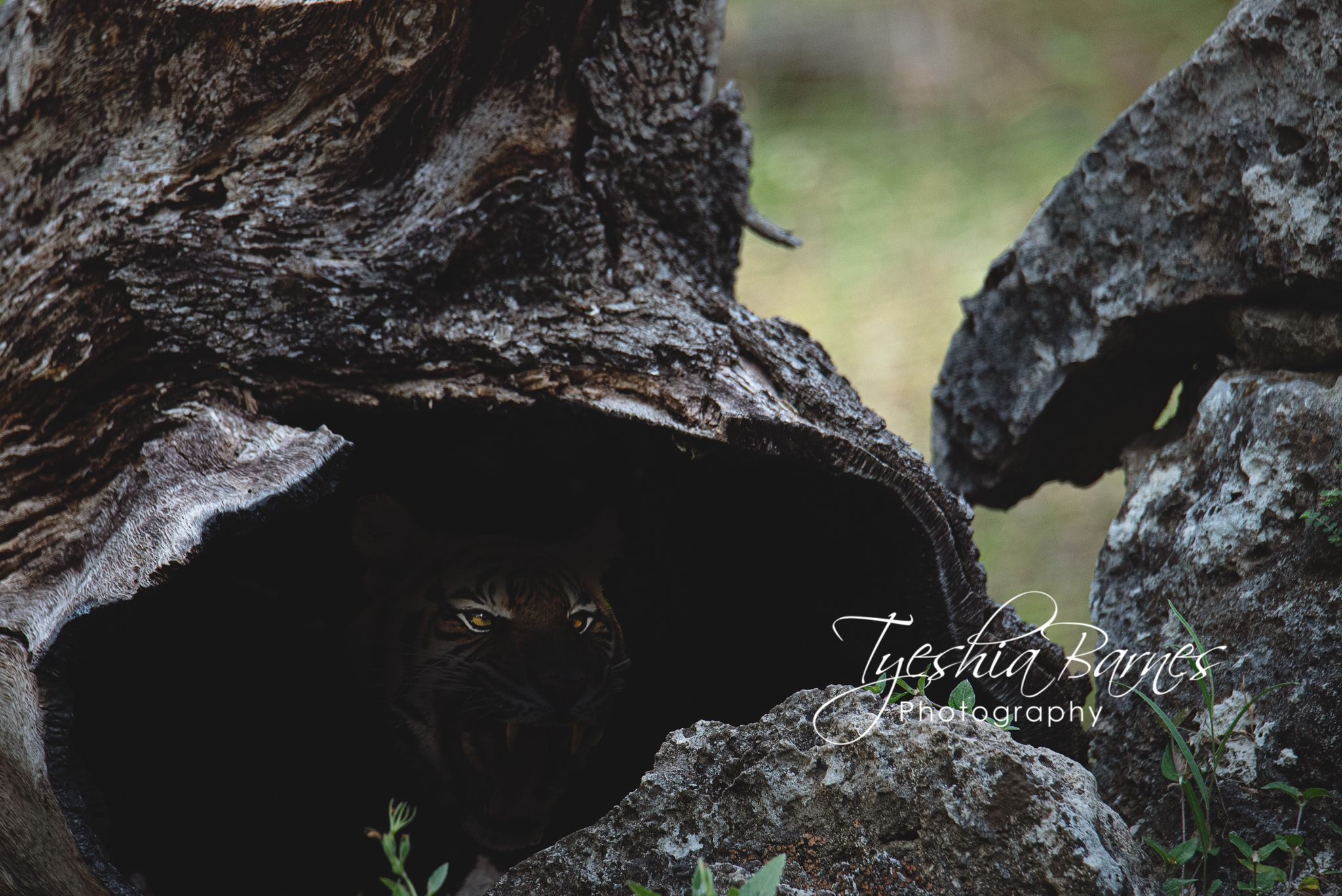 Beware of the dangers that stand before you rather the danger you can't see #naturephotography #blacklivesmatter #travel #travelphotographer #nature #landscape #commercialphotography #photographylover #photographylovers #photographylife #fineart #wildlife #cardinals #birds