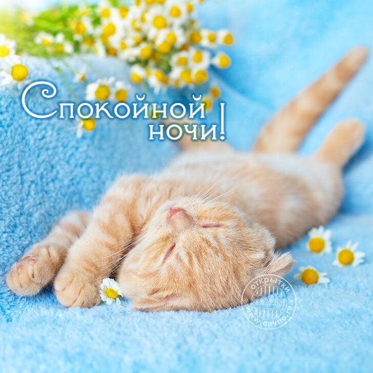 Открытки доброй ночи котеночек