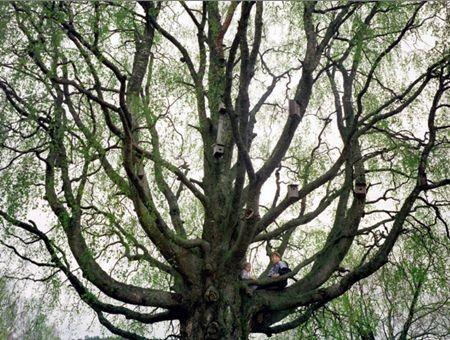 Ritva Kovalainen, Sanni Seppo: Tree People (Puiden kansa) - Koko lailla kirjallisesti   Lily.fi