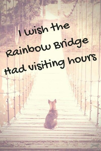 Dog Death Quotes Best Inspirational Dog Death Quotes Pinterest Images  Pet Dogs .