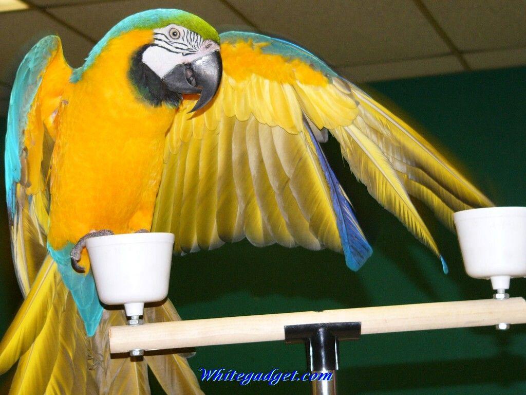 Name:  exotic birds photo.3