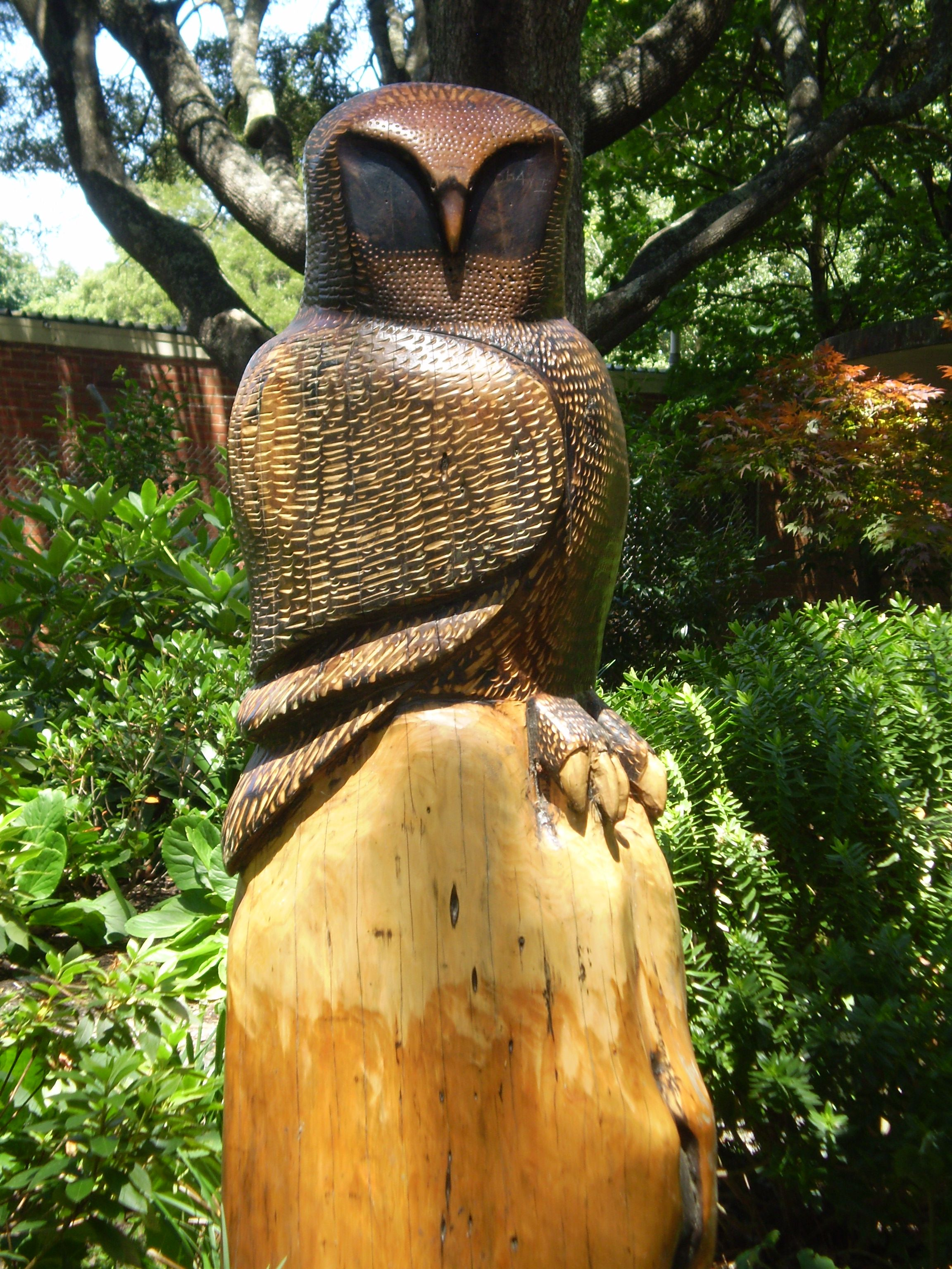 Wooden carved owl at sassafras victoria australia