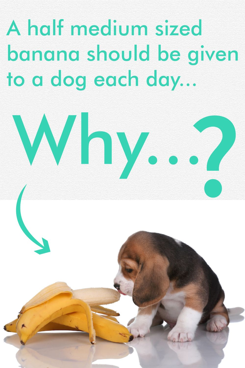 How much quantity of banana good for dogs? in 2020
