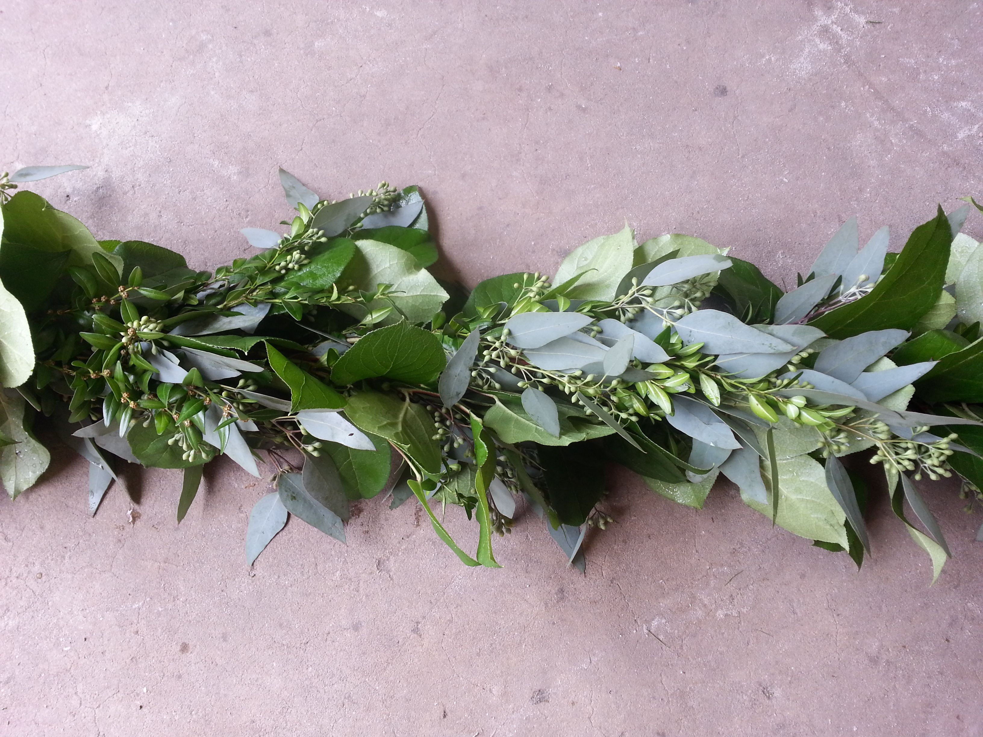 Salal Boxwood Seeded Eucalyptus