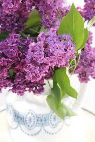 Står hortensia i lilla....  og syriner i samme herlige nyanse..     Vi harfire syrintrær i hagen og alle er i lilla , mørk og lys . De d...