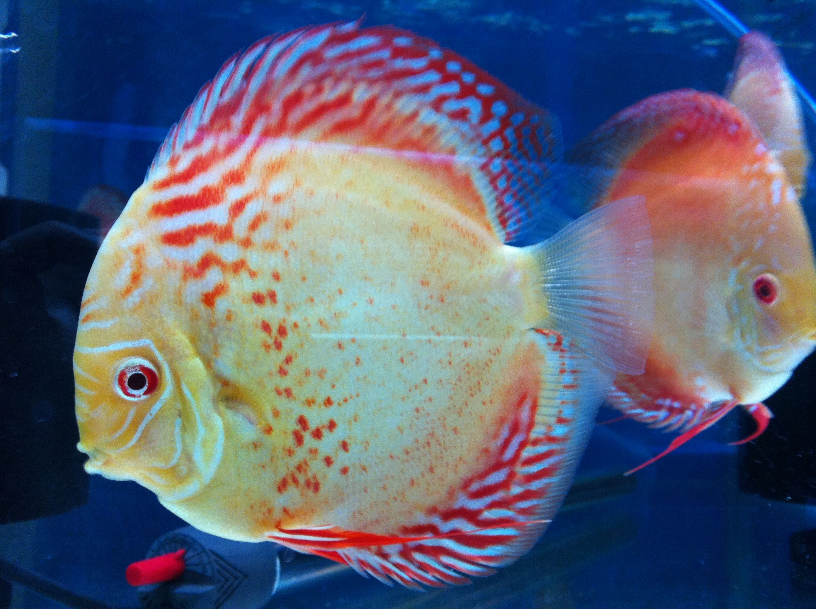 Top 22 Worlds Most Beautiful Fish