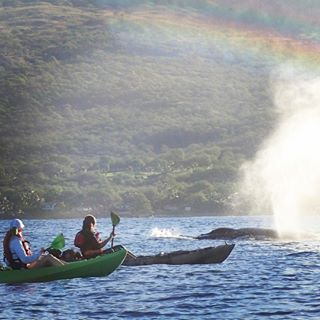 Maui the way you've always dreamed of, which probably doesn't include spending your afternoon in a conference room or buying $30 macadamia nuts. Read below to see the top 10 things to skip on your trip to paradise and what you should do instead.