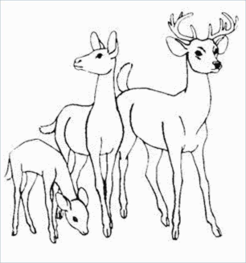 Deer Coloring Pages For Kids In 2020 Deer Coloring Pages Animal