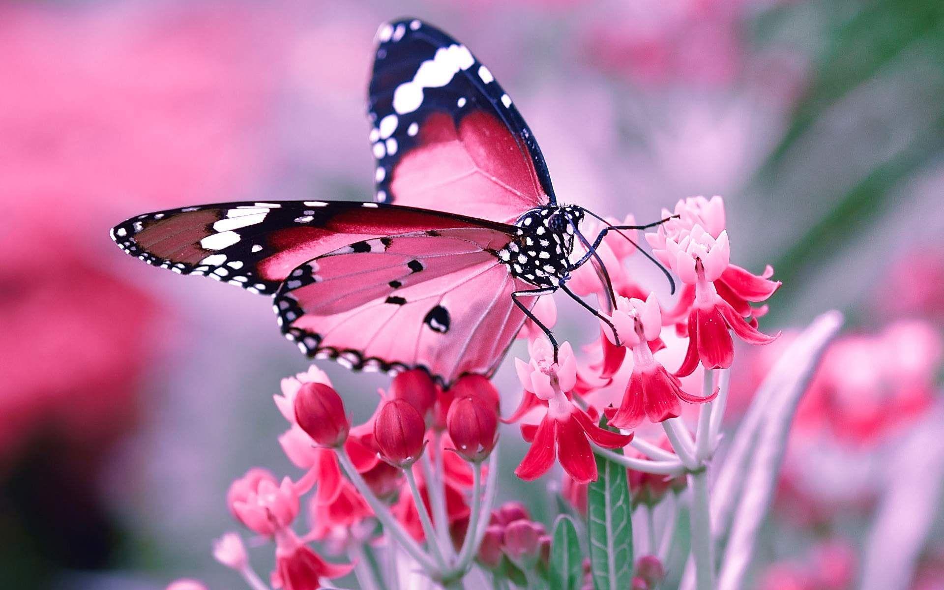 Wallpaper Blink Butterfly Wallpaper HD 2 1920 X 1200