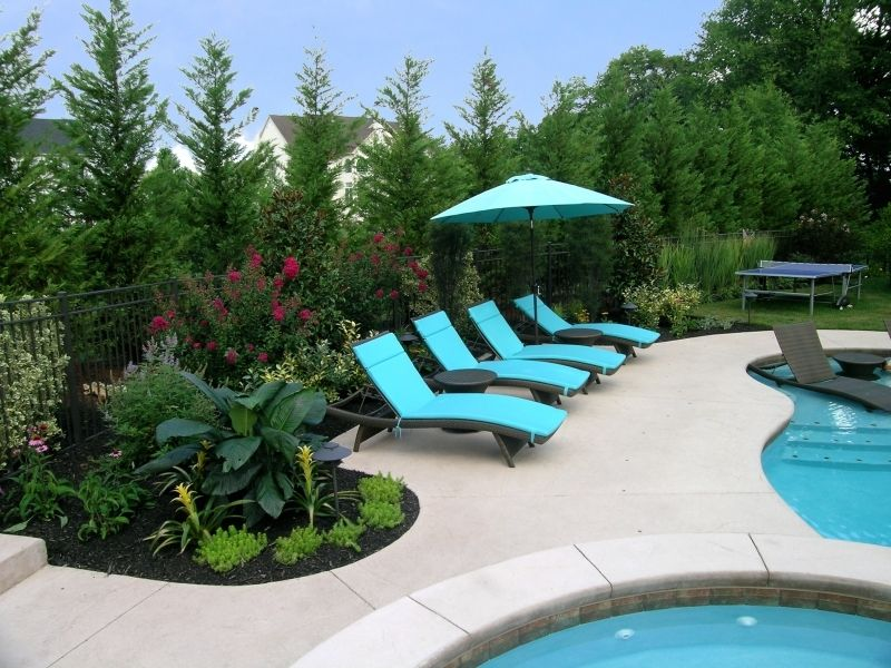 This swimming pool renovation included removing the old Best plants for swimming pool landscaping