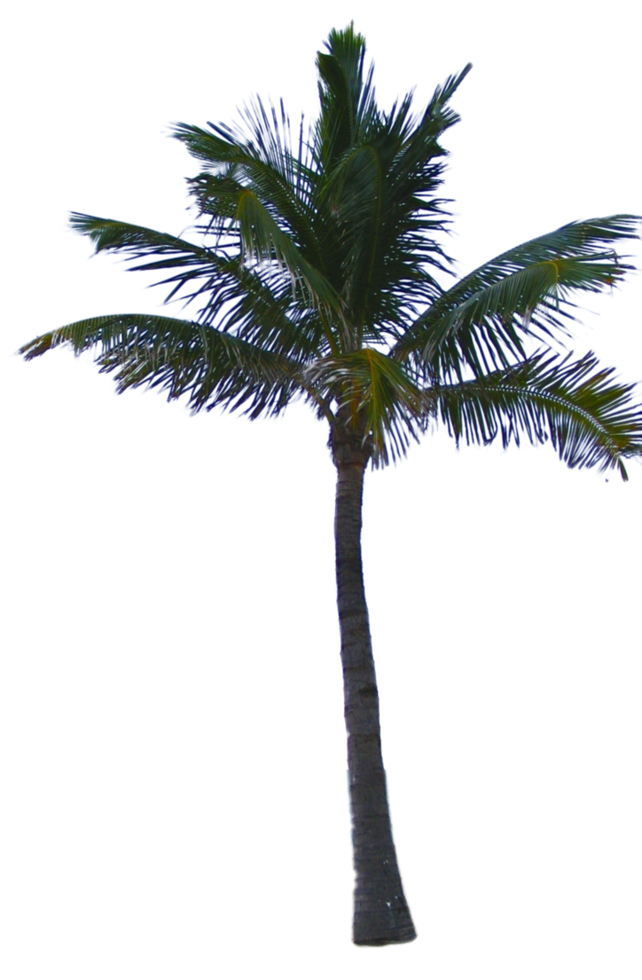 FREE DOWNLOAD! | drzewa | Palm tree png, Palm trees, Plant