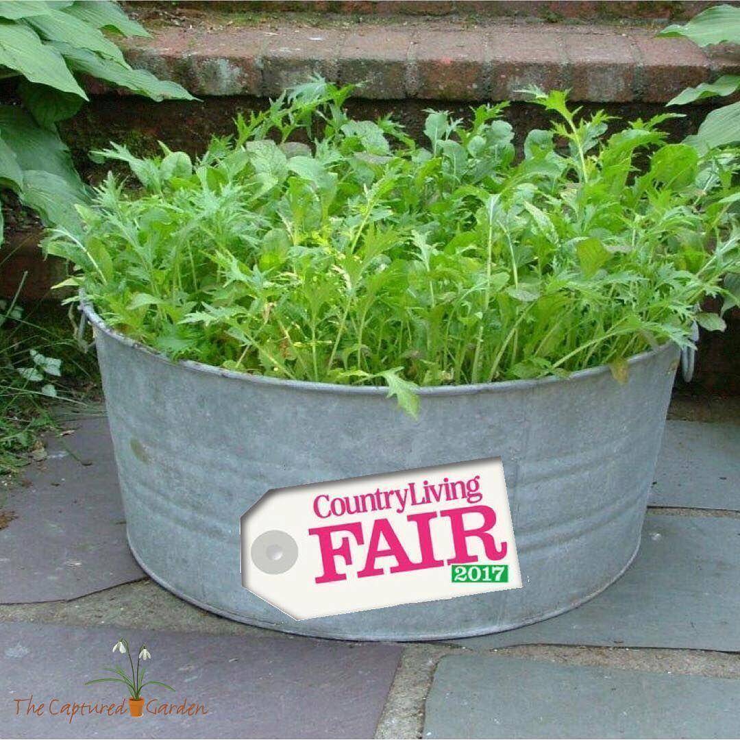 Urban Vegetable Gardening For Beginners: Container Gardening Tips For Beginners
