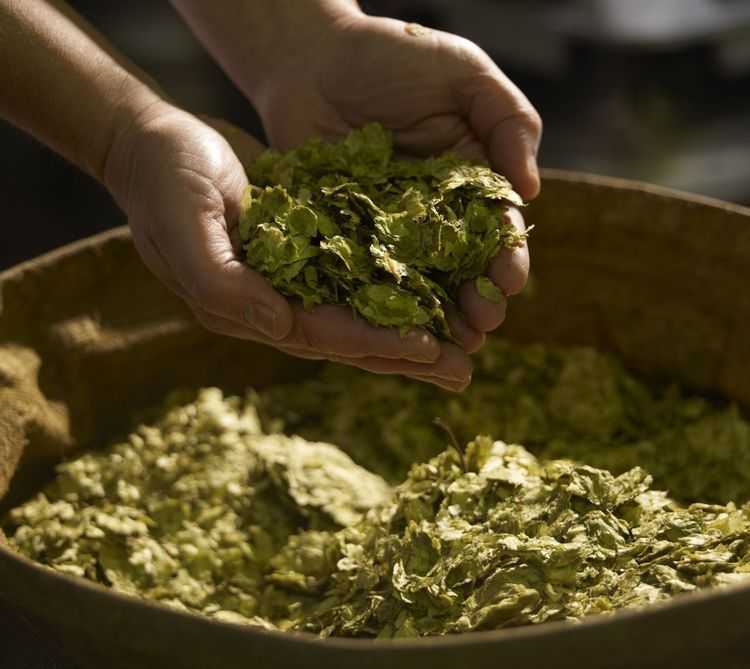 The Health Benefits of Hops