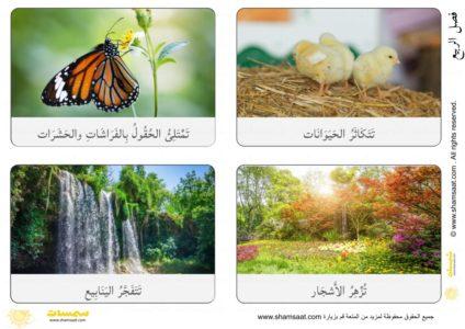 بطاقات فصل الربيع مفردات ومظاهر بصور فوتوغرافية 1