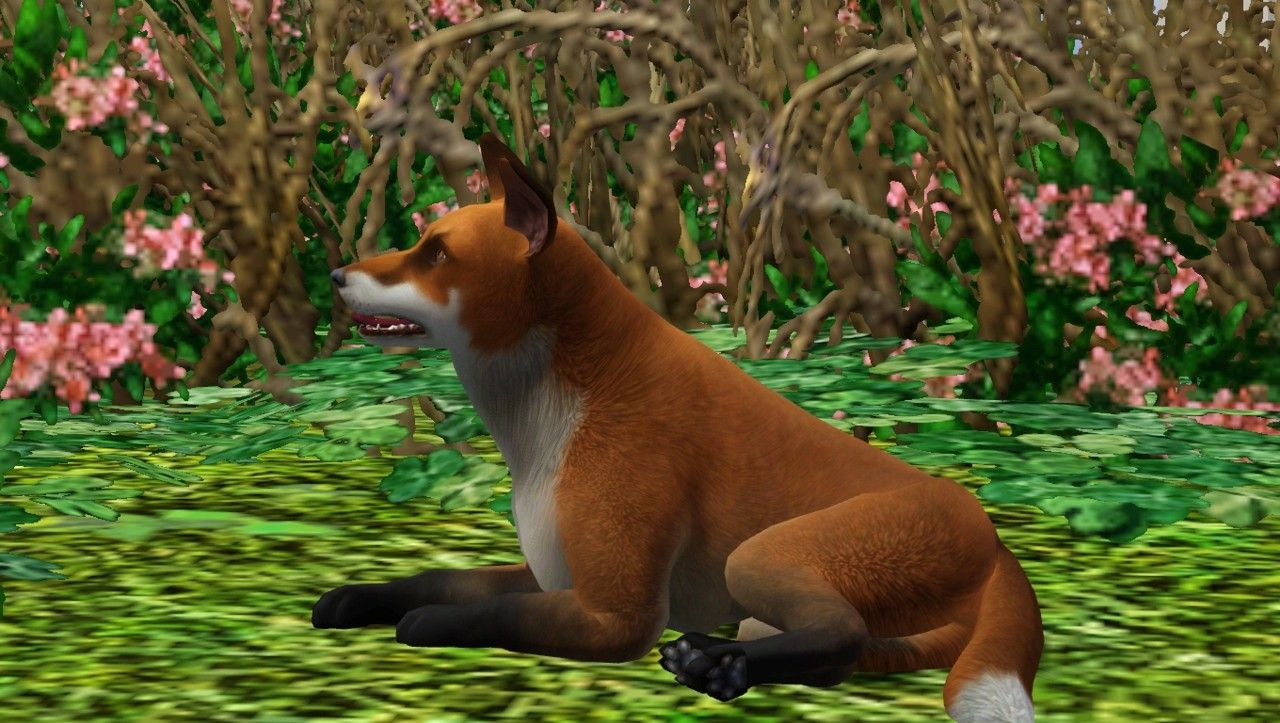 Mod The Sims The red fox Sims 3 stuff Sims, Sims 3
