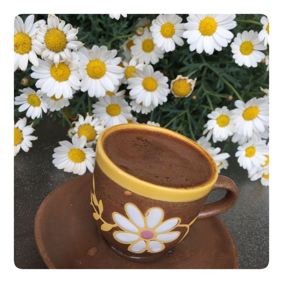 такое решение фото чашечки кофе и ромашки на столе вышло латинского слова