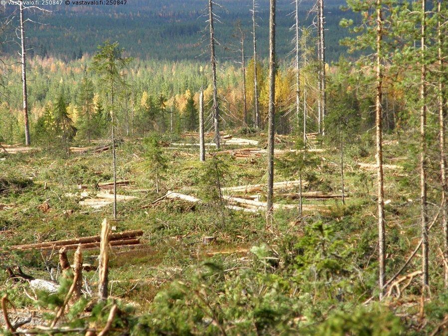 Metsäkauppa