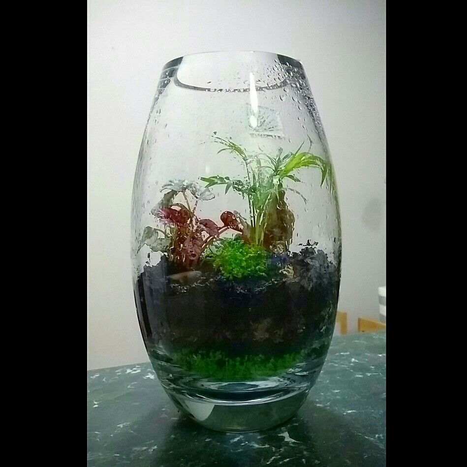 Homemade terrarium by me using a polish crystal vase layered up homemade terrarium by me using a polish crystal vase layered up with green gravel reviewsmspy