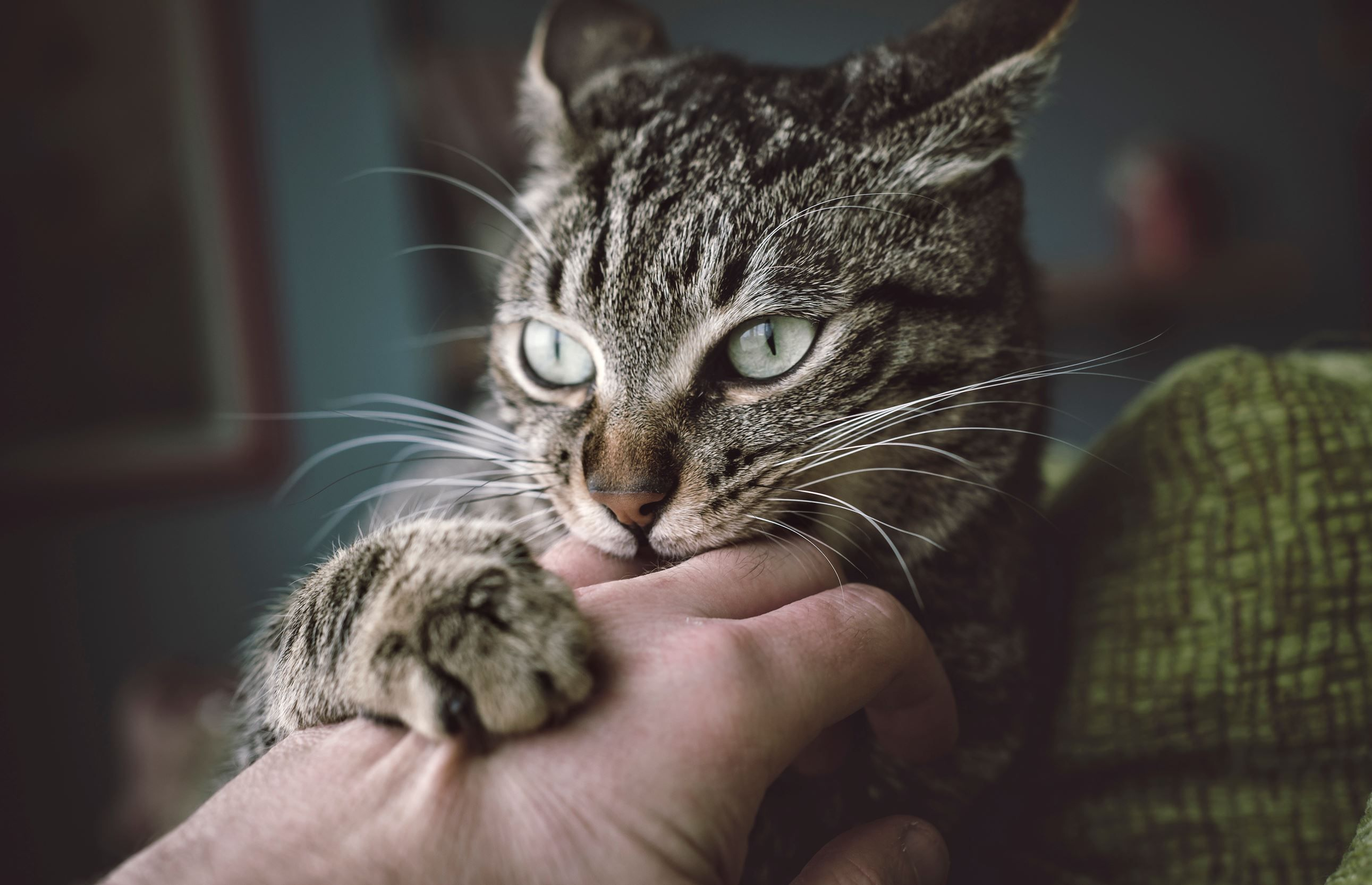10 Signs Your Cat Is The Worst Roommate Ever Cat Behavior Problems Cat Biting Cat Behavior