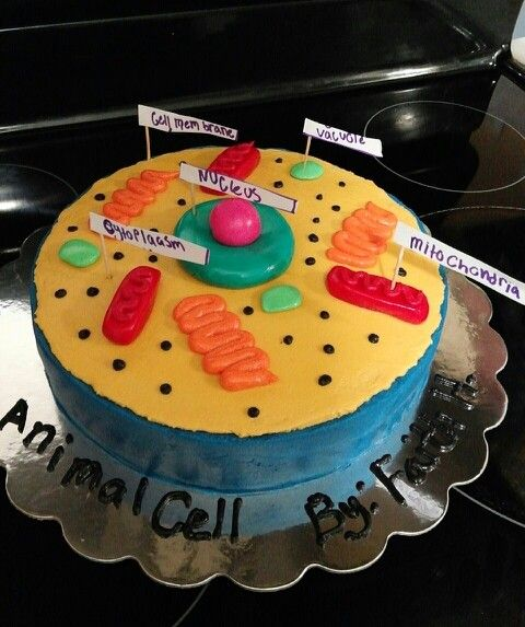 Animal Cell Cake Cells Project