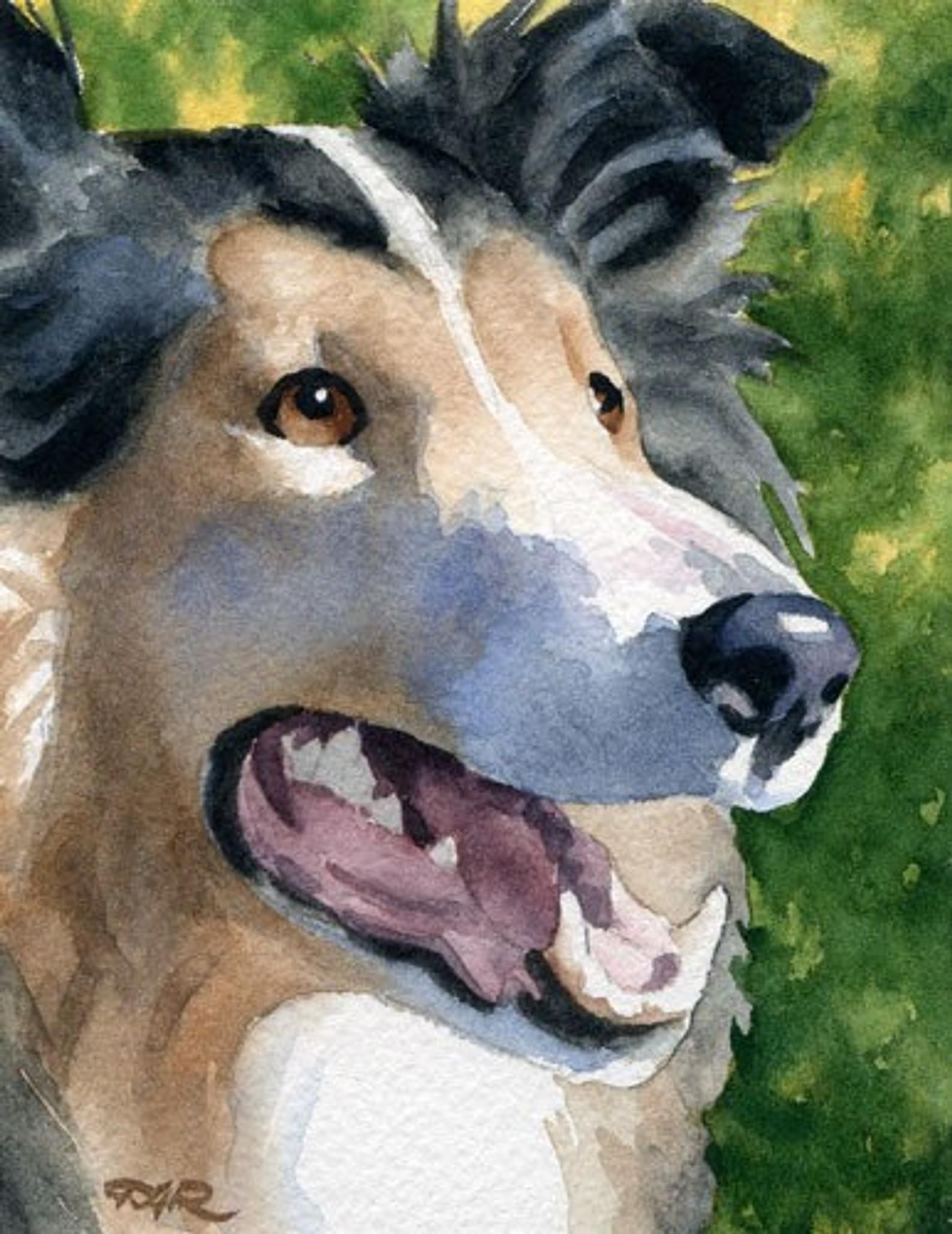 ROUGH COLLIE Dog Watercolor Art Print by Artist DJ Rogers | Etsy