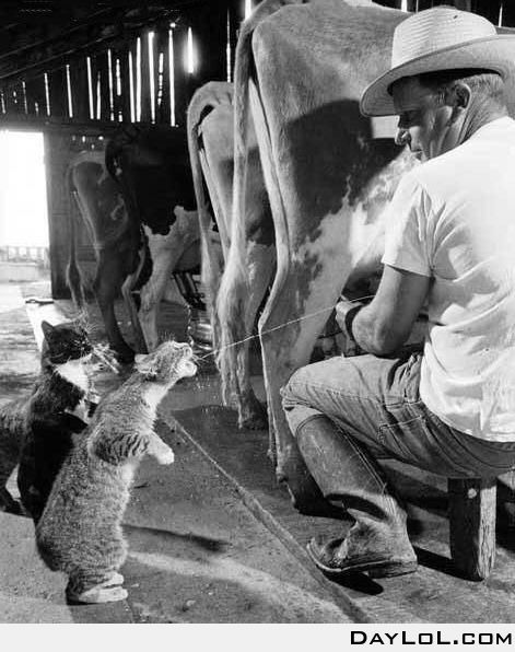 In line for some fresh milk
