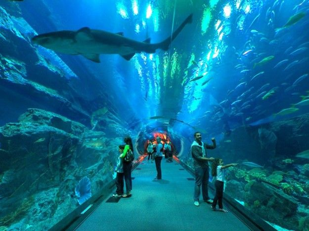 L Acquario Del Dubai Mall Animali Luoghi Di Vacanza E Foto
