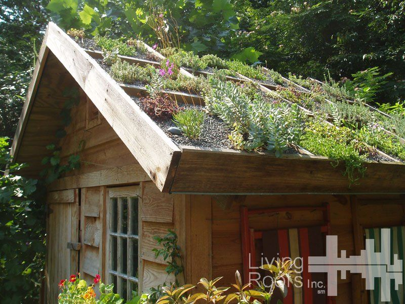 Créer soi-même une toiture végétalisée | Toiture végétalisée ...