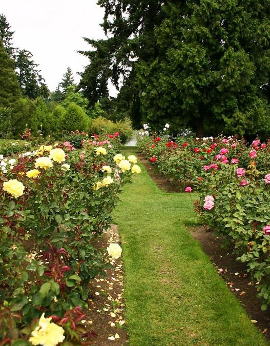 Itrg - International Rose Test Garden - Wikipedia, the free ...