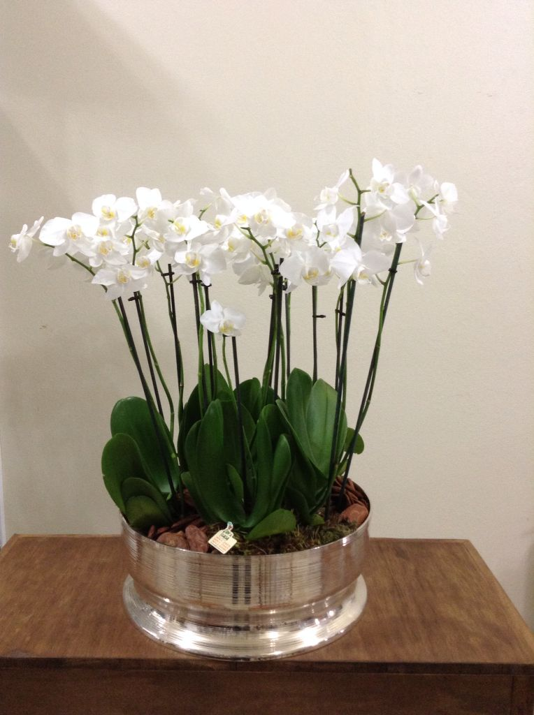 Cachepot de prata com orquídeas.