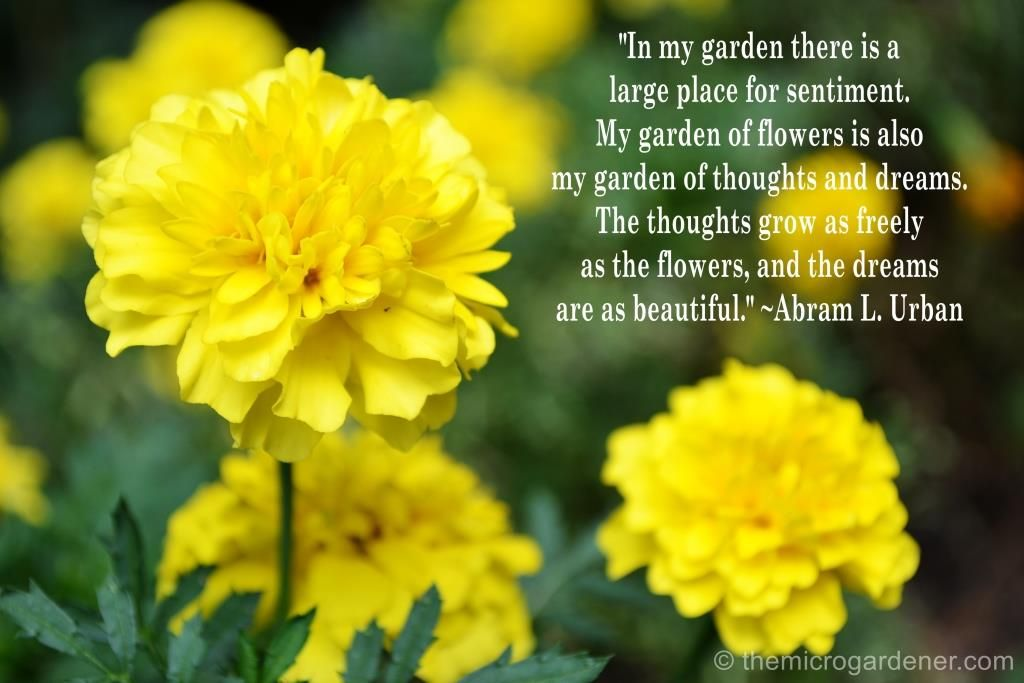 Download More Garden Quotes At This Link Themicrogardener