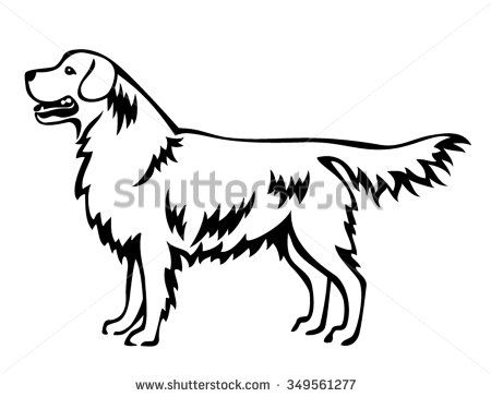 Golden Retriever Dog Standing In Side View Line Art Isolated