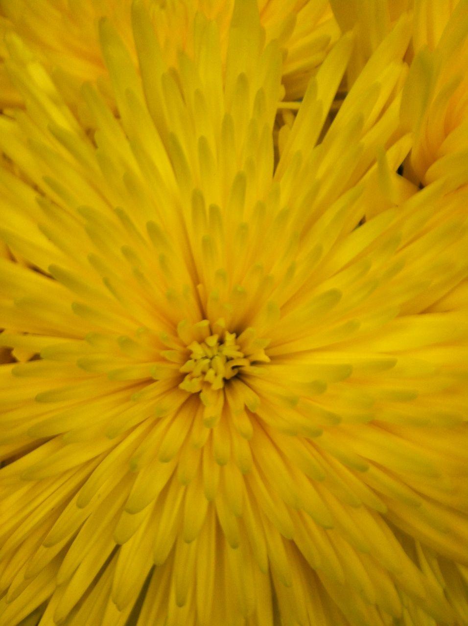 Colour Color Yellow Texture Inspire Yellow Colour