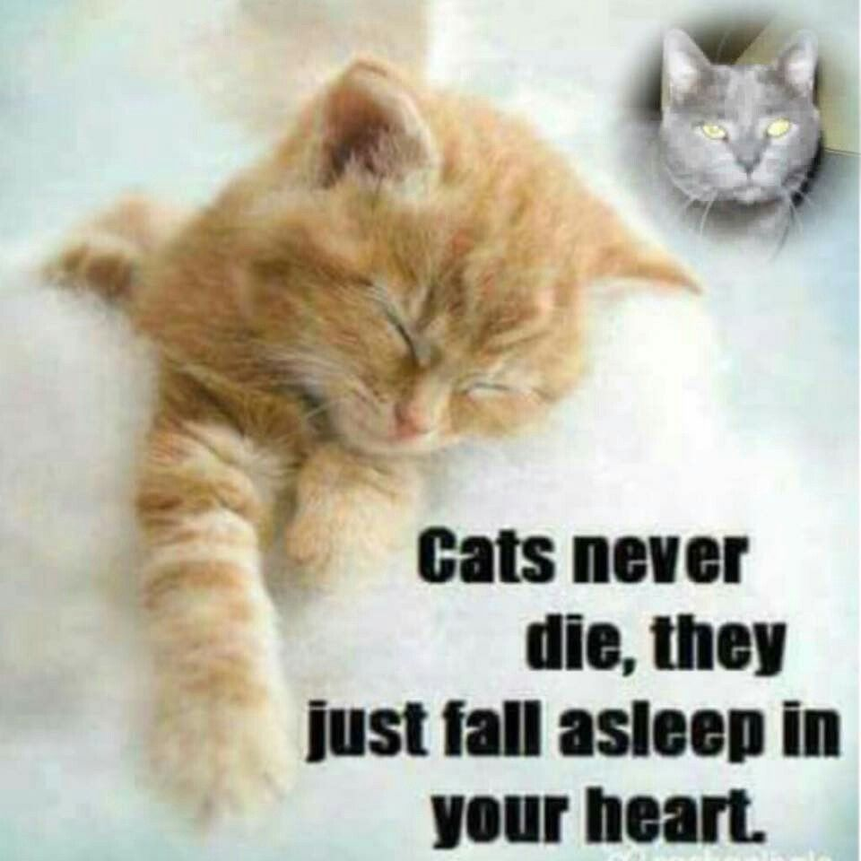 Friendship Quotes Cats: Cats Never Die