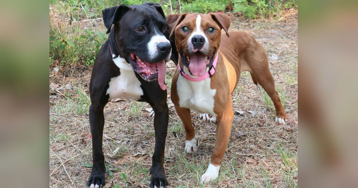 19+ Mitchell county animal rescue ideas