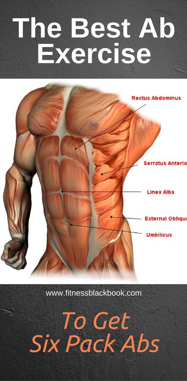 Famous Anatomy Of Abs Photo Human Anatomy Images Fullthreadahead