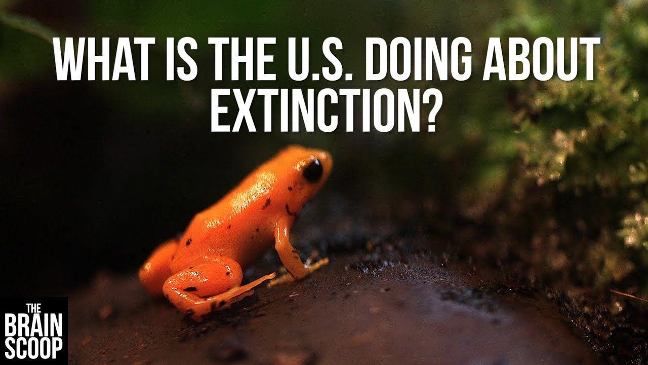 Endangered species an explainer endangered species