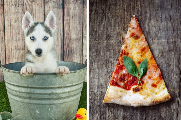 Pick Your Favorite Foods And We'll Tell You What Kind Of Dog You Are