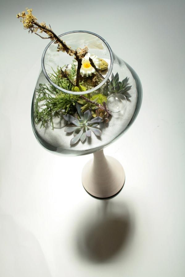 A garden in a glass  #plants