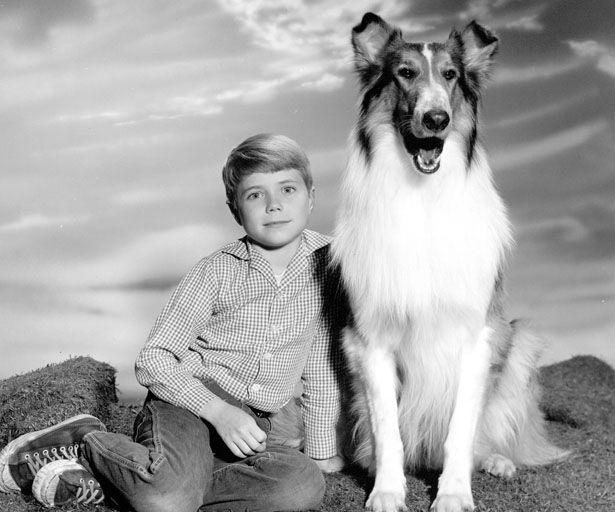 lassie - Google Search